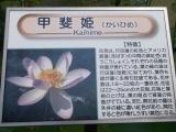 2014070635.jpg
