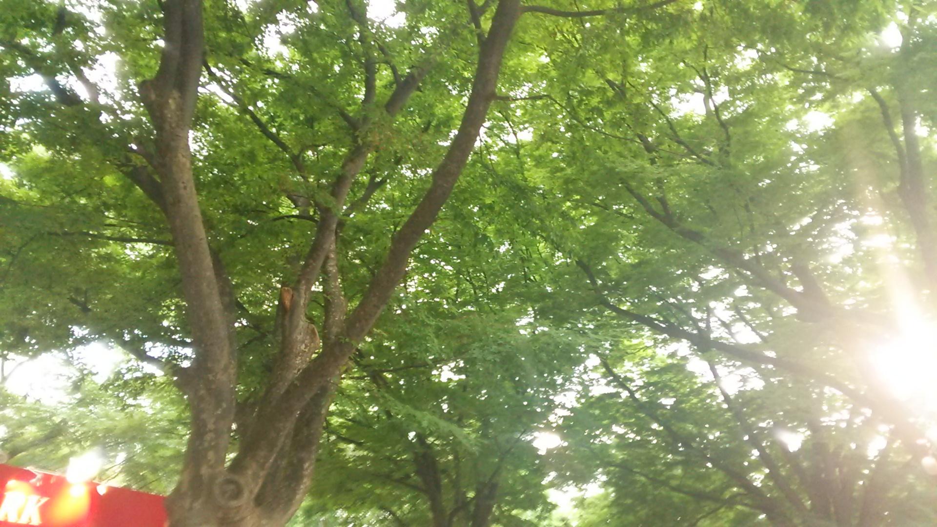 ビアガーデン景色 見上げた木