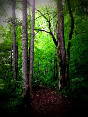 20140728 津別の森
