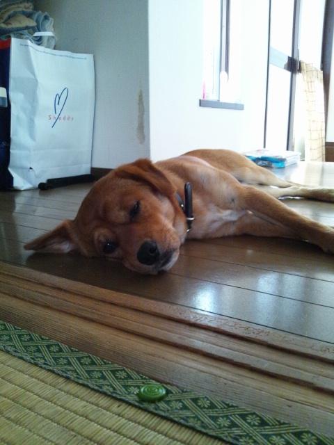 お散歩で疲れました。