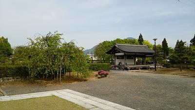murasakis11.jpg