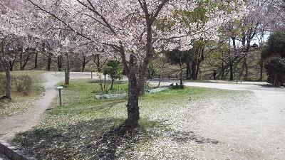 yanagawase11.jpg