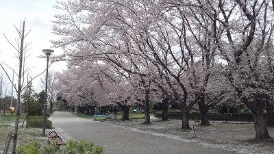 yanagawase12.jpg