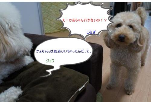 DSC07631_convert_20140405202131.jpg
