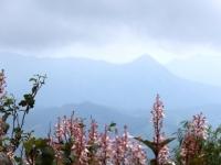 山頂に咲く 珍しいお花? 遠くに三角の山?