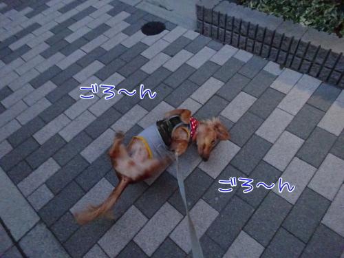 009_20140805195739b1f.jpg