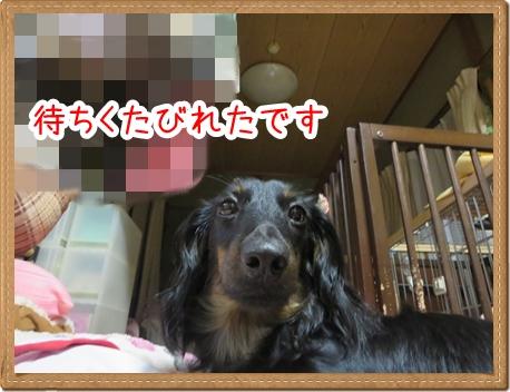 IMG_0804_1.jpg