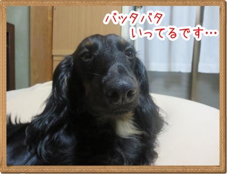 IMG_0810_4.jpg