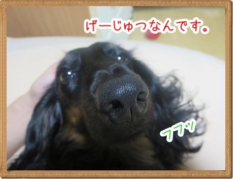 IMG_0812_4.jpg