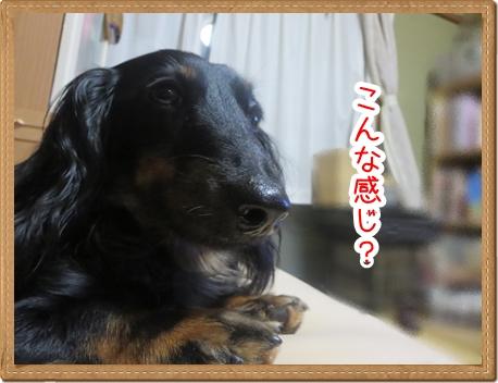 IMG_0821_4.jpg