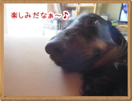IMG_0828_5.jpg