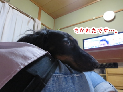 IMG_0908_4.jpg