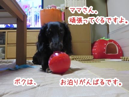 IMG_0910_5.jpg