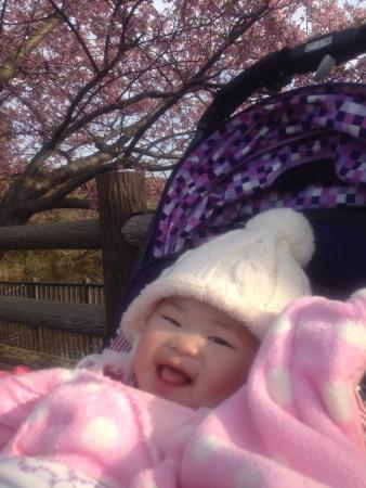 26-03 桜