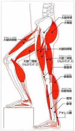 s-kinnikugun02下腿筋