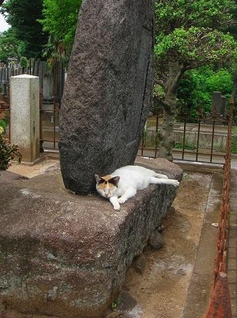 雑司ヶ谷霊園07