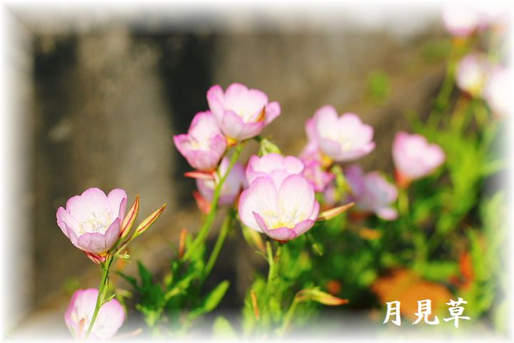 IMG_0017A5.jpg