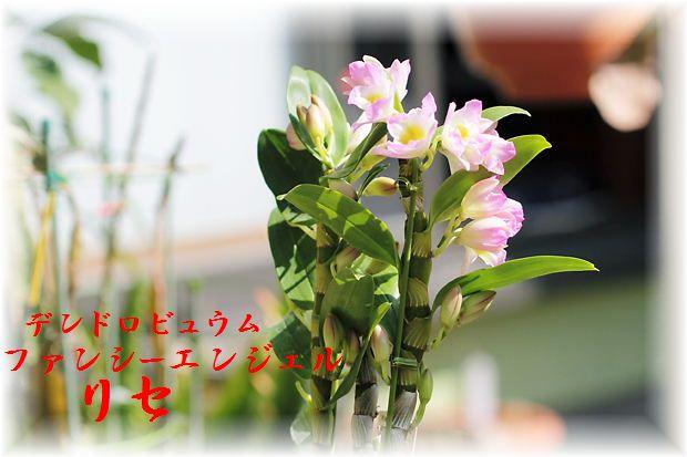 IMG_0073A1.jpg