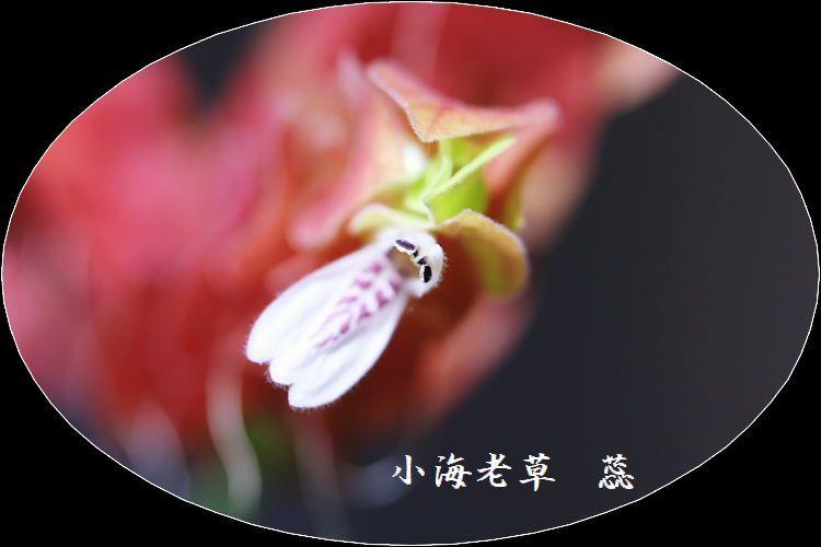 IMG_AA0029.jpg