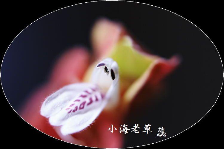 IMG_AA0032.jpg
