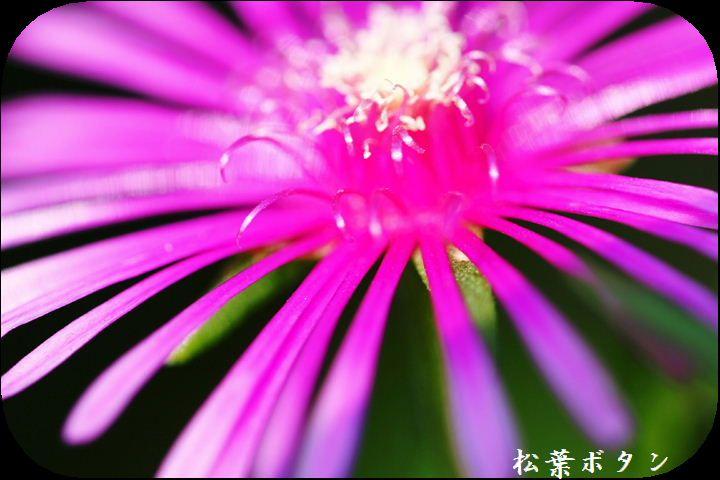 IMG_C10030.jpg
