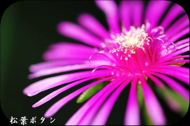 IMG_C30028.jpg