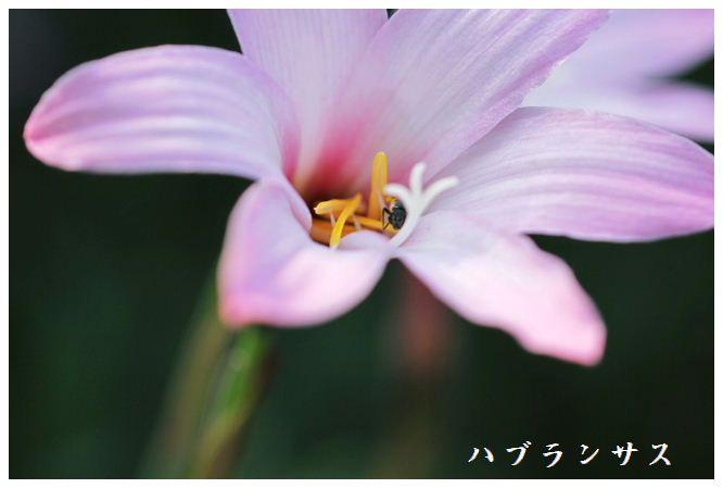 IMG_D20002.jpg