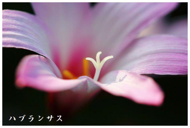IMG_D30006.jpg
