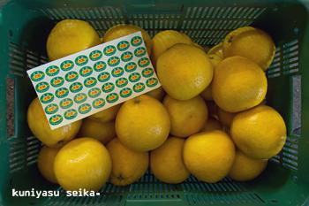 限定品ナダオレンジ