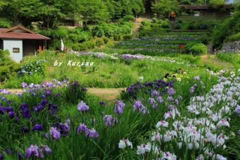 西新宿花しょうぶ園