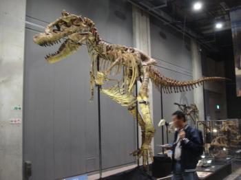 大型恐竜の化石