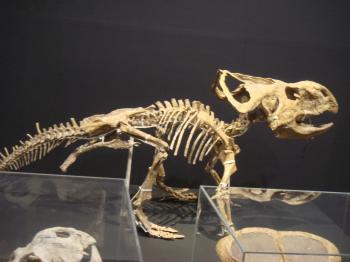 2恐竜化石