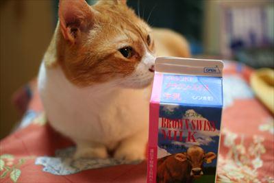 おいしい牛乳と