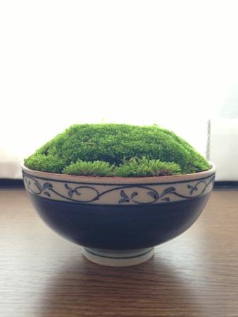 欠けたお茶碗と苔のコラボ:ツレ作