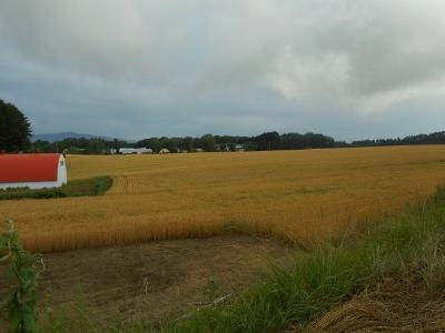 麦秋間近の道東