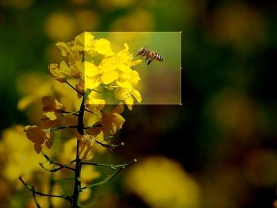 蜂オリジナル_R