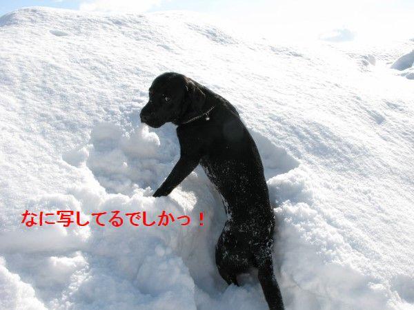 IMG_0111 (600x450)