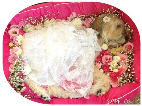 戴いたお花とレースのドレスでお空に旅立ちました