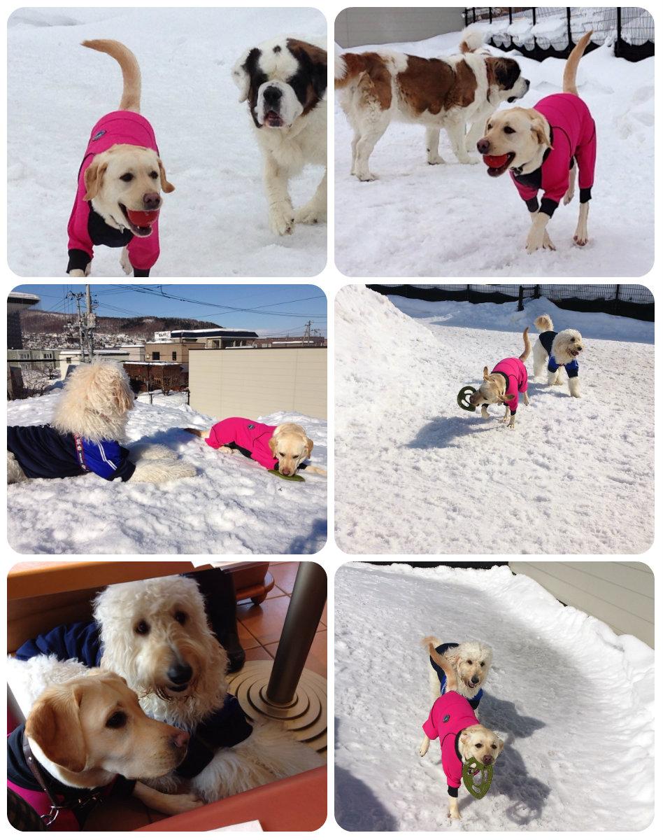 3月は雪遊びたくさんしたワン