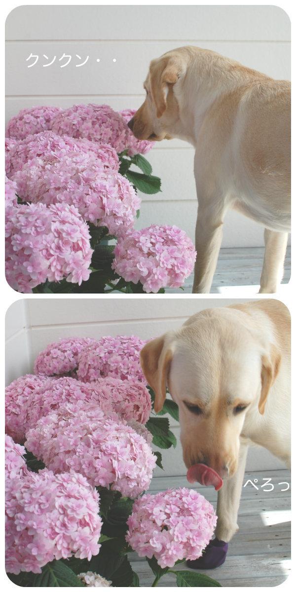 お花のにおいかぎまくりプルーン