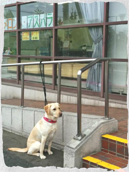 郵便局で待つ練習中♪