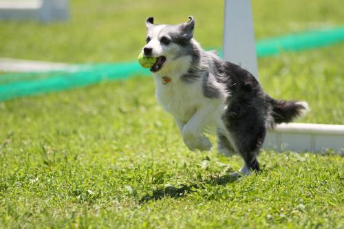Flyball_1048 小