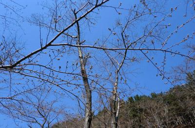 2014-4-13八森御所の台jpg