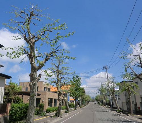 2014-5-19うちの前の街路樹