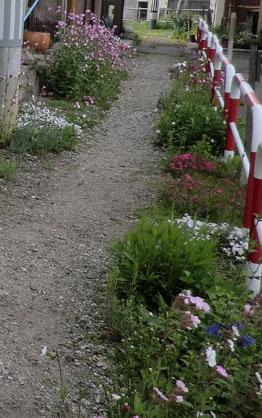 2014-5-19うちの裏手の草花④