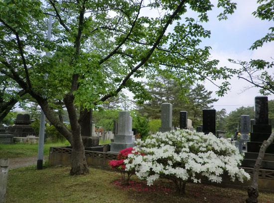 2014-5-26うちの前の植物たち
