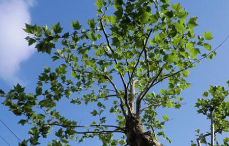 2014-5-26うちの前の植物たち④⑥