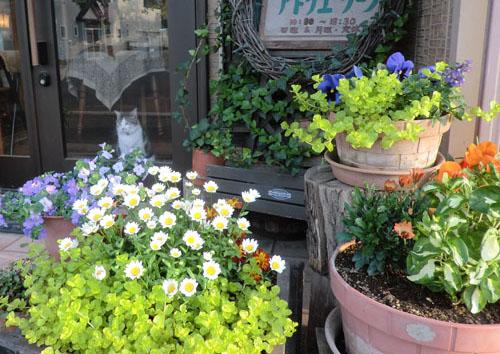 2014-5-26うちの前の植物たち⑤