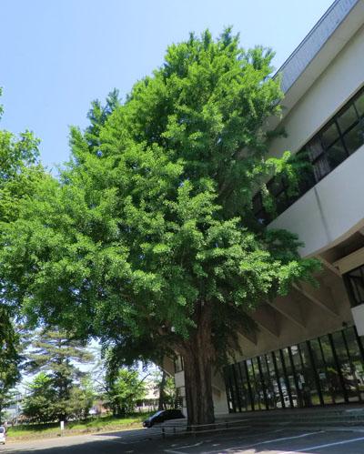2014-6-2市民体育館前の自然⑦jpg