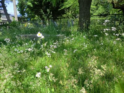 2014-6-2市民体育館前の自然⑨